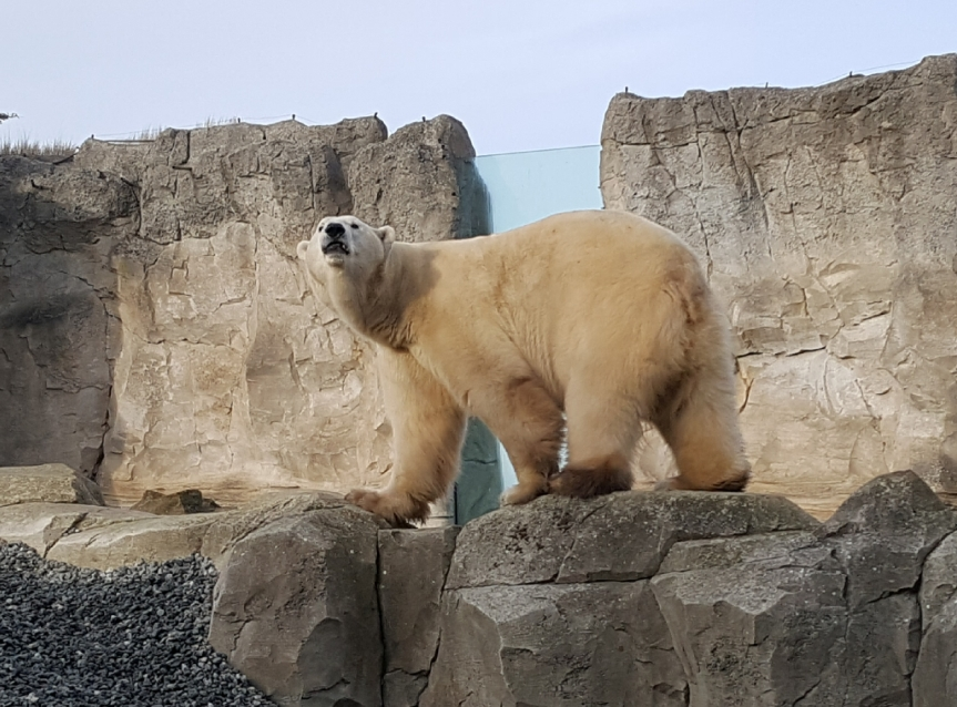 Cold enough to visit an Eisbär