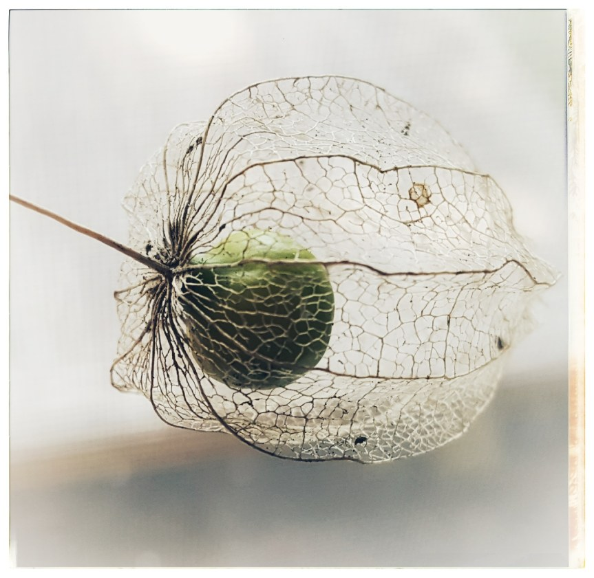 Protected. Photo of a seed pod found in Nottingham Forest. Photo by Dragonfly Leathrum