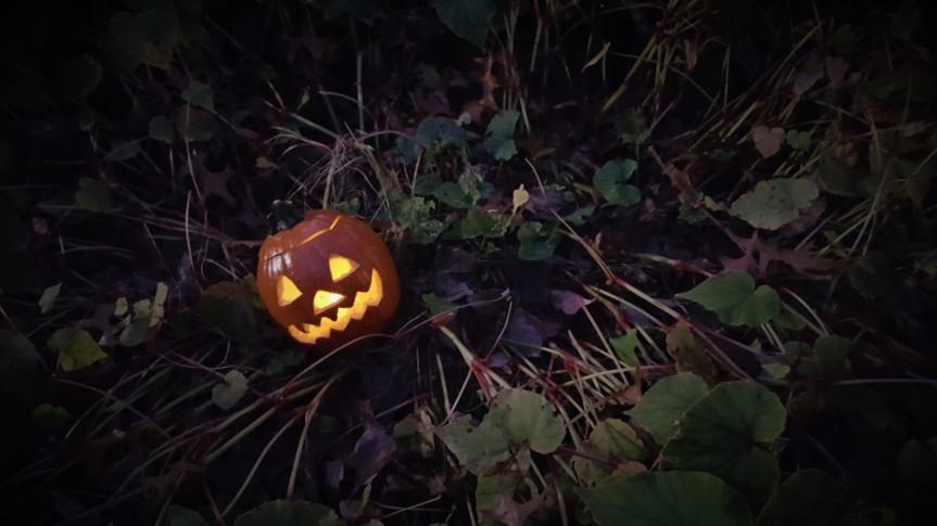 Baby pumpkin. Halloween 2020